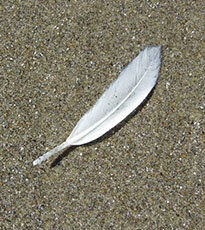 White feather on the sandy beach